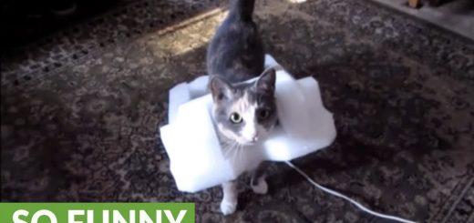 発泡ポリエチレンの鎧をまとう猫、足取り軽くご満悦