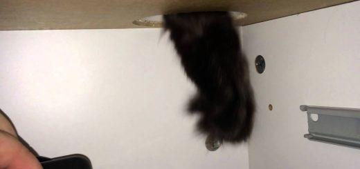 猫の手も借りたい瞬間出てきた猫、健闘するも手助けには至らず