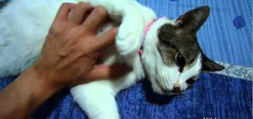 全身コースの猫マッサージ、仕上げは床屋の最後のアレ