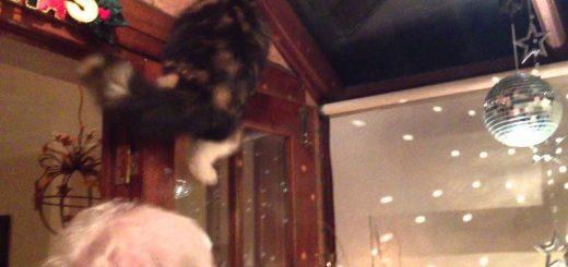 ミラーボールの光を追う猫、人の肩を使って高みを目指す