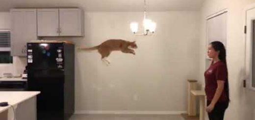 二の腕を空けて飼い主スタンバイ、猫は飛び込む胸の中へと