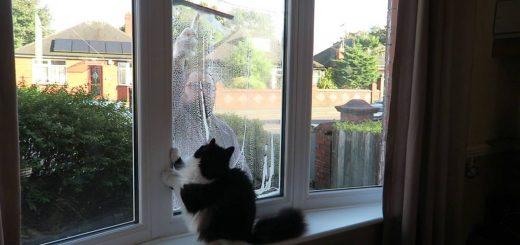 GWに窓の掃除がしたくなる、猫との遊びを合体すれば