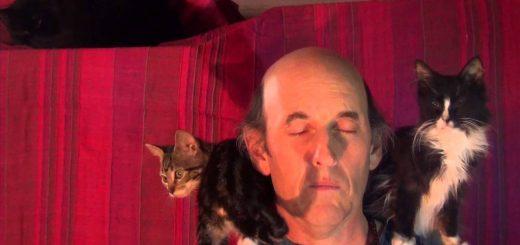 瞑想する老師がなぜか猫ホイホイ化、膝へ肩へと次から次へと
