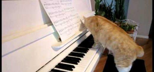 デュエットで鍵盤を弾く茶白猫、頬ずり奏でるグリッサンド