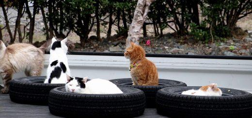 猫を吸い込むブラックなホール、古タイヤの穴すべて満席