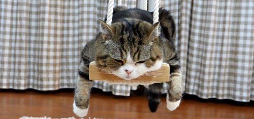 音もなくシッポが振られるそのたびに、揺れるブランコ猫を乗せ