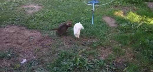 庭を駆けるよ子猫と子ウサギ、仲良く楽しく無邪気さ全開