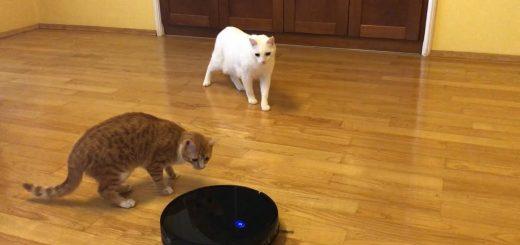 お掃除ロボの背中に手を乗せ追随する猫、カリカリ食べ食べ懐柔されて