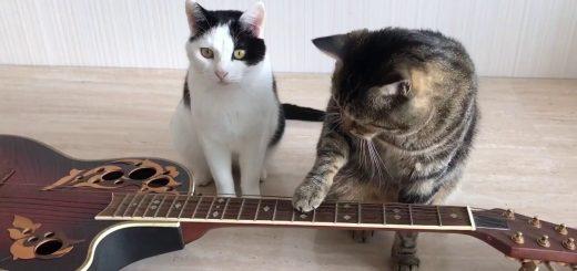 2匹の猫の「Four Hands Guitar」、ときおりシンクロTwo Handsに