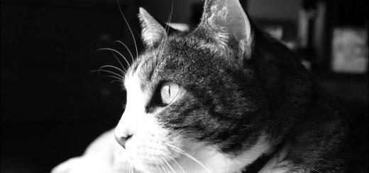 猫のゴロゴロホワイトノイズ、1日の3分の1をカバーする超ロング版