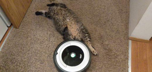 バーチャルウォール役を買って出た猫、足が届かずルンバに抜かれる
