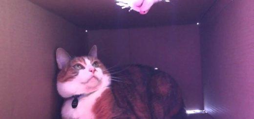 頑なに箱のシェアを拒む猫、籠城作戦で見事撃退