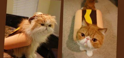 お手製のホットドッグを食べる猫、ホットドッグを身にまとい
