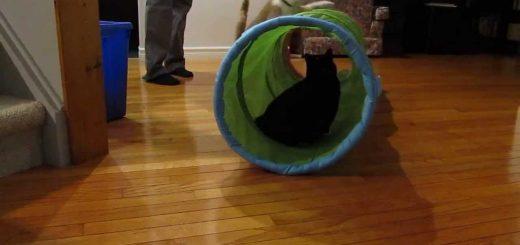 外から中から享楽三昧、IKEAのプレイトンネルに夢中な猫たち