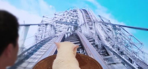 VRっぽいジェットコースターを体験する猫、耳は後ろに目は見開き