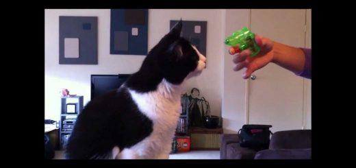 水鉄砲でお仕置き受けるいたずら猫、もっと撃てよと逆効果に