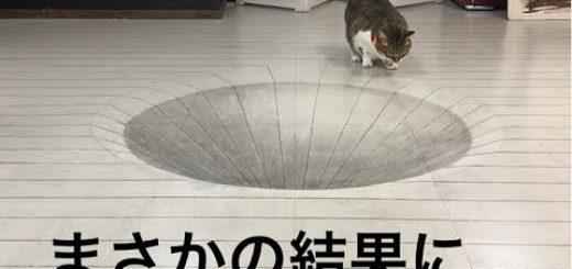 精巧なトリックアートを前にした猫、見ているこちらがなぜかドキドキ