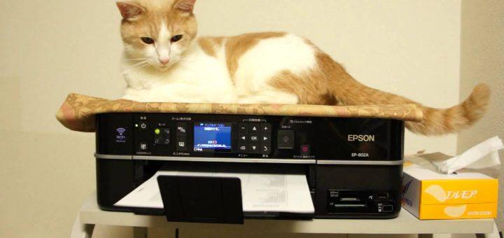 プリンタの反復運動を活用する猫、シッポも体もふんわり揺らぐ