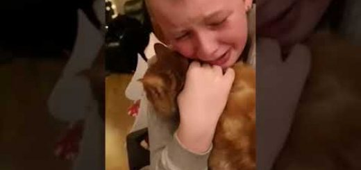 7か月ぶりに飼い主と再会した猫、むせぶ男児の顔舐め慰む