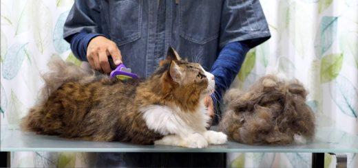 1匹の猫をブラシでとかしたら、ほぼ同サイズの2匹に増殖