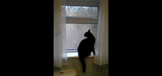 滑り出し窓のロックを2つとも、外して開けて猫は逃亡
