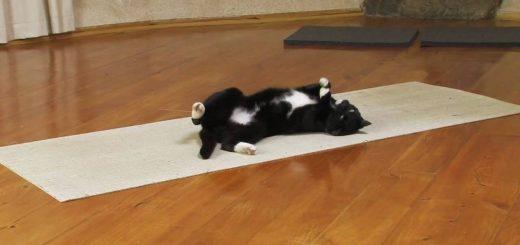 猫によるヨガのレクチャー動画、自由律俳句を見るかのごとく