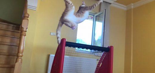 美しく飛び舞い弾き翻り、猫のキーパーにオファー殺到