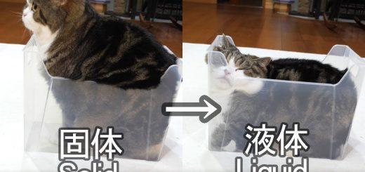 個体から液体へと変化した猫、表面張力までも再現