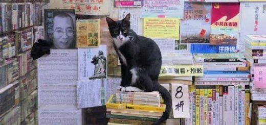 お客より猫の数のが多い本屋、猫目的での来店は不可