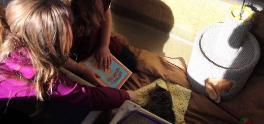 猫を相手に子どもが本を読み聞かせ、保護シェルターの「Book Buddies」プログラム