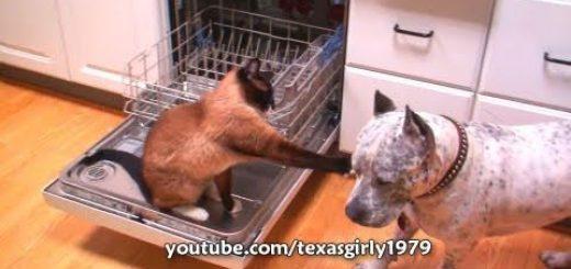 食洗機城に籠城する猫、明け渡し迫るワンコをパンチで撃退