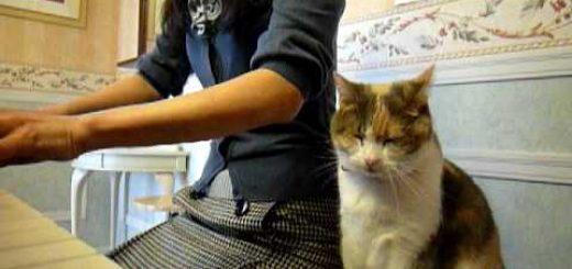 君が代のピアノ独奏聞きながら、猫は佇むほぼ不動で