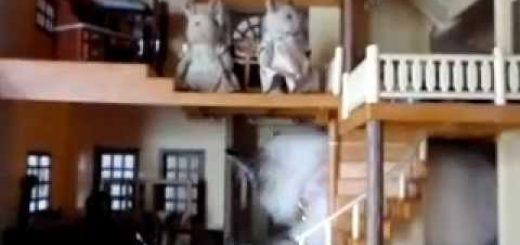 シルバニア一家の事務所を襲う猫、床板越しに標的を狙う