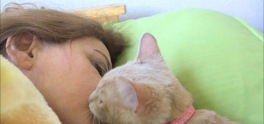 朝朗け目覚めを促す子猫のキス、飼い主喜び逆効果に