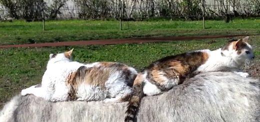 尻を寄せ猫たち相乗るロバタクシー、行き着く先はロバのみぞ知る