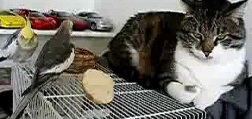 歌声の合いの手代わりに肉球タッチ、インコはさえずる猫に捧げて