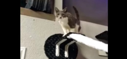 3次元の世界は猫には狭すぎる、反転世界で能力全開