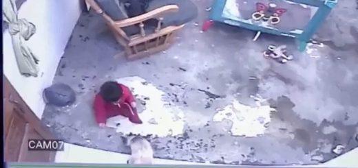 階段に落ちる手前で赤子を確保、猫がダッシュで爪掛け救出