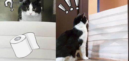 猫は越えるよトレペの壁を、飛んでくぐって最後は壊して