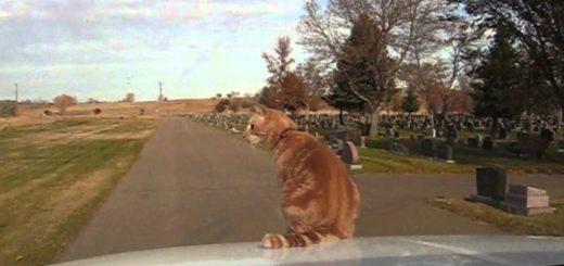 箱乗りからのボンネット乗りをキメる猫、荷台の縁もスタスタ歩き
