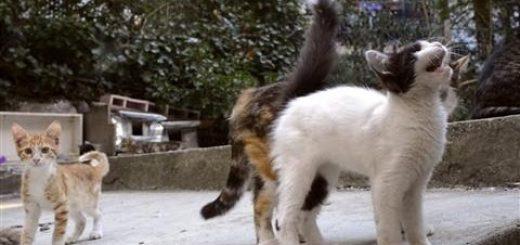 イスタンブールじゃ猫は王様、遊ぶよ集うよそこ彼処
