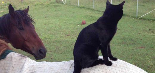 悠々と馬の背寝そべる黒き猫、放置されて慌てて起きる