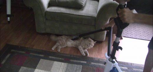 スピナーのごとく回るよ猫モップ、掃除機でのメンテナンスにも対応