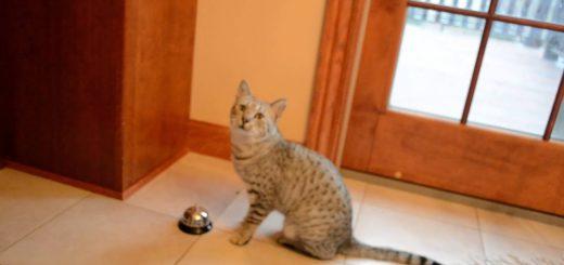 ベルを鳴らしておねだりする猫、要求するのは物にはあらず