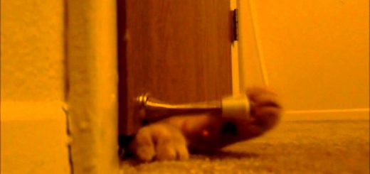 毎朝5時に発報アナログ猫アラーム、脳髄に響く重低音