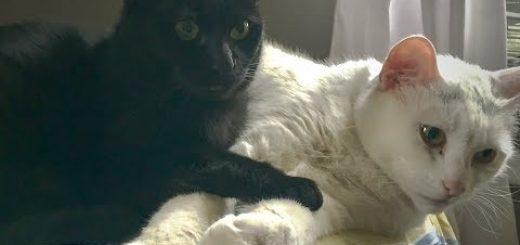 猫たちは眠るよ連続12時間、編集無しのノーカットで