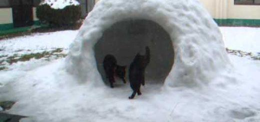 雪の日にいざかまくらの猫2匹、施工チェックに大忙し