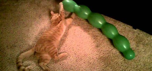 えんどう豆の風船抱き締め遊ぶ猫、愛情込めすぎ対消滅