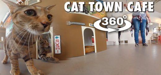 猫カフェを猫目線で見たらこうなる、隠れ家の中も全天球カメラで