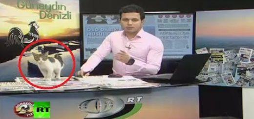 ニュース番組生放送中に乱入する猫、ノーパソの上で暖をとる